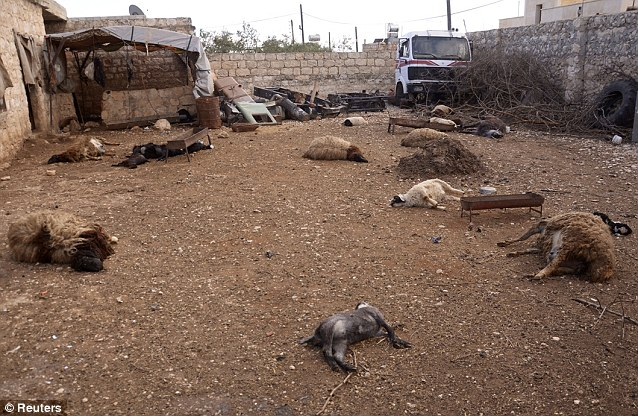 Were WMD's Used? Animal carcasses lie on the ground, killed by what residents said was a chemical weapon attack in the northern city of Aleppo. The UN says it will investigate the claims