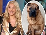 Shakira says she looked like a Shar Pei dog after giving birth... as she opens up about fears of losing sex appeal