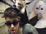Justin Bieber and his monkey Mally