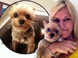Actress Tricia O'Kelley's deaf Yorkshire Terrier is returned after terrifying two day ordeal at hands of dognappers