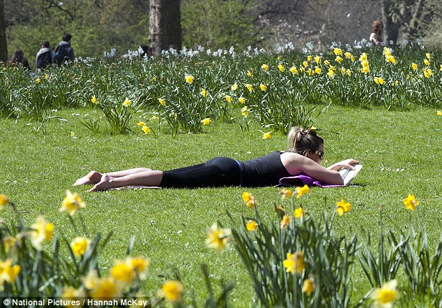 Spring weather: A woman enjoys the sunshine among the daffodils in St James's Park today as temperatures are set to hit 20C