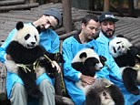 The Backstreet Boys headed over to the giant panda base to feed and serenade baby pandas