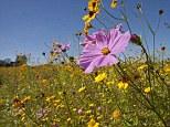 Wild flowers in a Somerset meadow