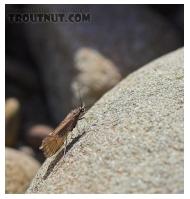 Entomology 12