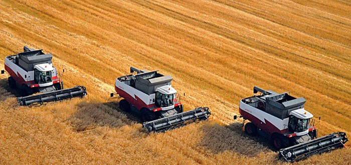 food-security-grain-harvest