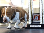 Walle, a huge-headed, duck-footed mix of beagle, boxer and basset hound is the upset winner in the 25th annual competition. Walle and his owner, Tammie Barber, won $1,500 and will make several network TV appearances next week.