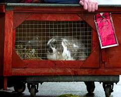 The rabbit that got a parking ticket!