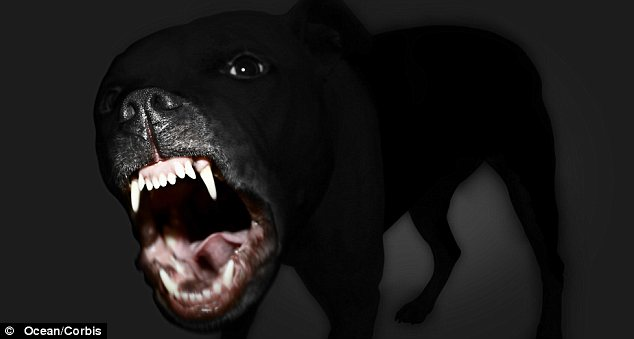 Angry: The driver of the minivan was also the owner of the dogs, similar to the one pictured here