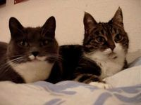 Two Cats Having A Conversation
