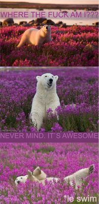 trippin' polar bear