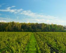 Canadian Millennial Wine Tour: Niagara Region