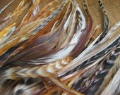 Natural Striped Rooster Saddle Feathers -- over 50 pieces