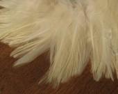IVORY saddle feathers -- over 50