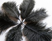 2 Ostrich Feathers BLACK Tiny Mini Baby Plumes Midnight Ebony Crow