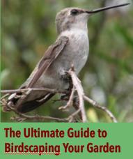 Ultimate Guide Birds