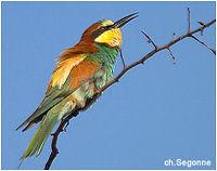 12_RCA_Oiseau_Chasseur_d_Afrique