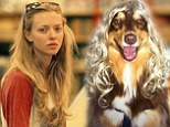 Well they do say dogs look like their owners! Amanda Seyfried's pooch tries out blonde wig before she takes him for a walk