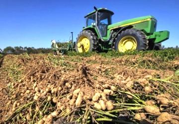 City Slickers Harvest Cash Crop