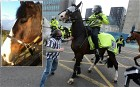 A police horse that came under attack while in action at a Newcastle United match has recovered and is back in the paddock.