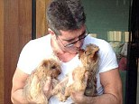 New arrivals: Simon Cowell has taken on a pair of adorable puppies