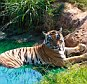 A tiger at an Oklahoma zoo bit a female employee's arm on Saturday after she broke protocol by sticking her hand inside the animal's cage, the zoo owner said.
