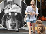 Amanda Seyfried runs errands with ever-present companion Finn before posting a cute photo of the patient pooch donning a festive hat