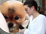 Ruff life! Lea Michele reveals she's adopted a new dog the day after she goes makeup free to hit the spa for some R&R