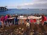 Giant oarfish found off California coast