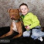 RECENTLY RESCUED PIT BULL RETURNS FAVOR BY SAVING LITTLE BOY'S LIFE