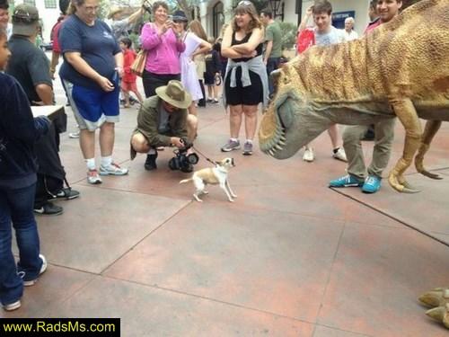 سگ پرو