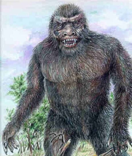 HAIRY: W Asmussen's drawing of the mystical Yowie that may well live in the Mulgowie area.