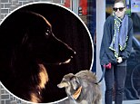 'Finn Noir': Amanda Seyfried snaps an artistic photo of her beloved pet dog after taking him on a walk in chilly New York