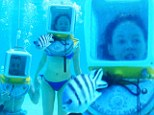 Under the sea, you and me! Newlywed Rose McGowan dons a blue bikini to go diving with new husband Davey Detail during their honeymoon in the Maldives