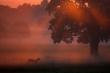 Deer in misty scenic