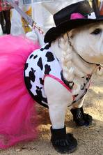 It was a dog day afternoon on Hampstead Heath and in Manhattan as pooches paraded in their Halloween costumes