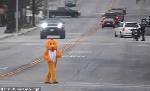 No joke: Police dressed an officer as a chicken during a clampdown on drivers failing to yield at crosswalks