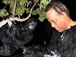 Absolutely bananas! Conrad Murray swings from a tree in gorilla costume while celebrating Halloween