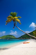 palm tree overhanging a beach at Peter Island, BVI