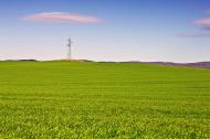 Wheat field valley