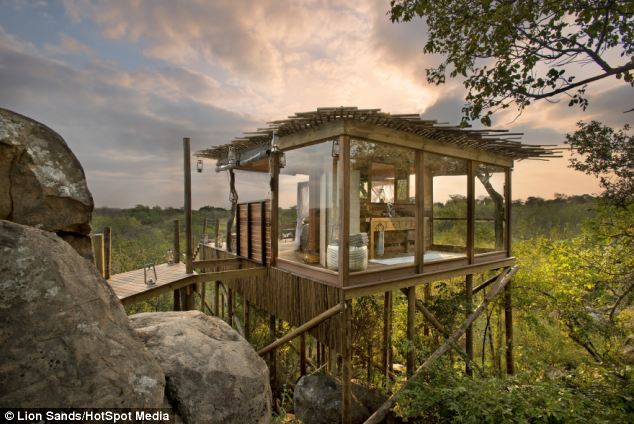 Beautiful: The Kingston treehouse, set on the banks of the Sabie River, South Africa