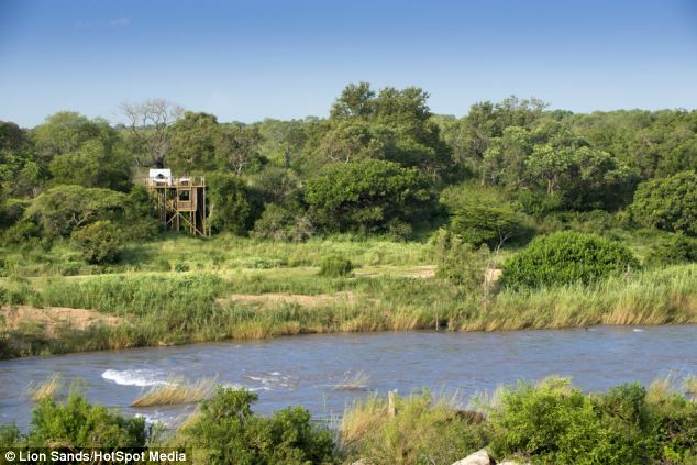 All three treehouses are on the banks of the Sabie River which runs through the game reserve