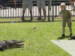 Celebration: Robert Irwin marked his tenth birthday by feeding fish to salt water crocodiles in Australia Zoo