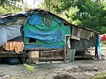 Primitive: One of the filth-ridden shacks where a family cult lived in squalor in a remote valley near Sydney. Children with terrible birth defects were found living there after four generations of in-breeding