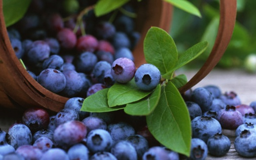 blueberry benefits for your health