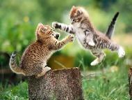 Assurance pour animaux de compagnie 2