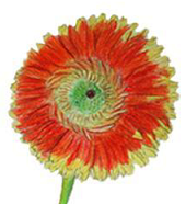 Art floral vignette