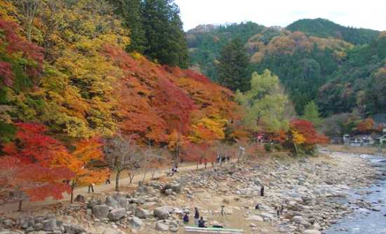 Should a Japanese maple be grown in shade?