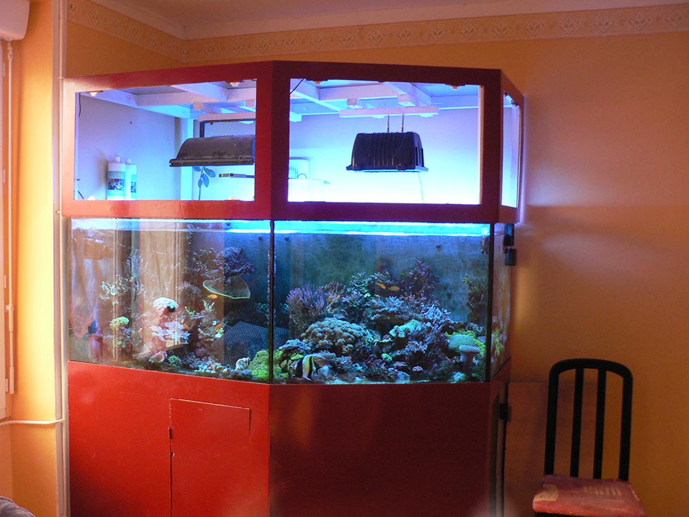 Aquarium récifal à vendre