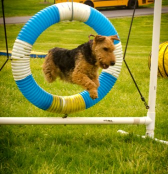 Annies_flying_terrier