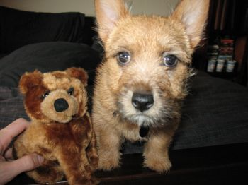 Finley and the Bear